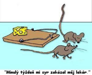 Myšky, které mají přísnou dietu