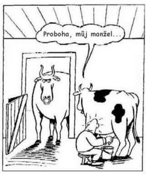 Co si říká kráva, když ji někdo dojí?