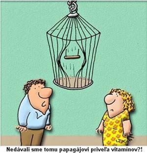 Když je tvůj papoušek svalovec