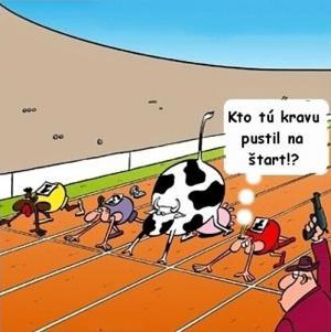 Kráva připravená ke startu