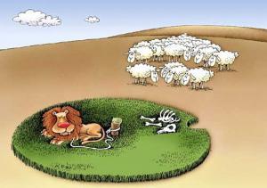Ovečky tiše našlapují kolem lva