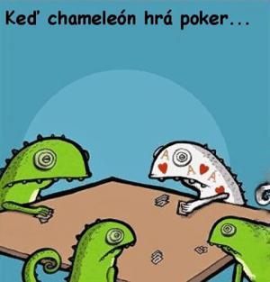 Jak vypadá poker mezi chameleóny