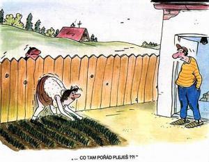 Jak se baví soused každý den