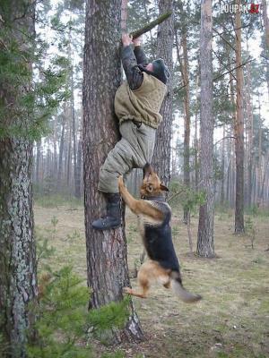 Když tě honí v lese pes