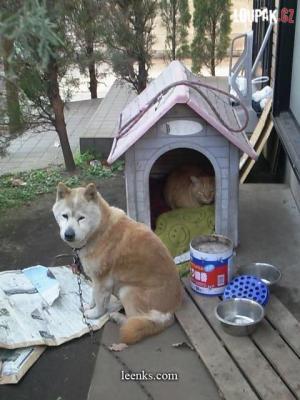Pes, který hlídá kočičku