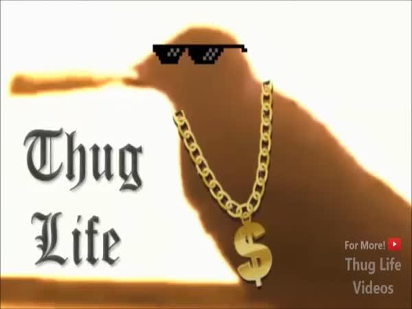 Největší zvířecí gangsteři #2