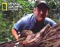 National Geographic - napadení od hada