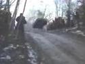 Ruská rally - kácení stromů