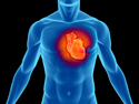 VĚDA - Jak funguje lidské srdce