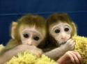 Opice - spolupráce a spravedlnost