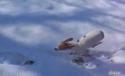 Pejsek , který nemá rád sníh  2