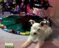 Zvířecí Jingle Bells