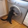 Kočka vs. pračka