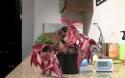 30minutová obnova zvadlé kytky