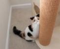 Hyperaktivní kotě
