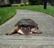 Když želva zdrhá