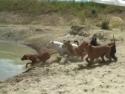 Letní psí radovánky