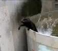 Kočka (ne)má ráda vodu