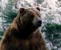Reklama - Medvěd