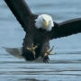 Orel při lovu ve slowmotion