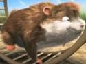 Animace - křeček Bob