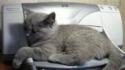 Kočka vs. tiskárna