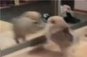 Pes vs zrcadlo