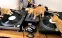 Kočičí DJové