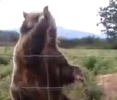 Slušně vychovaný medvěd