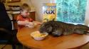 Snídaně s leguánem