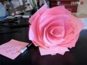 OBRÁZKY - Inspirace - Růže