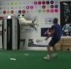 Nejúžasnější frisbee triky se psy