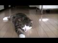 Kočka Maru