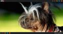GALERIE - Nejošklivější psí plemena