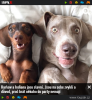 GALERIE - Slavné psí duo dostalo štěně