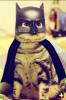 GALERIE - Legrační cosplay pro mazlíčky 1