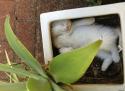 GALERIE - Kočičí spací gymnastika 2