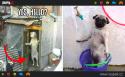 GALERIE - Když jsou psi na dvou nohách