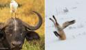 GALERIE - I zvířata mají své dny