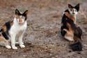 GALERIE - Nicolas Cage jako kočka 2