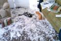 GALERIE - Hodní domácí mazlíčci