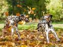 GALERIE - Jak si psi užívají podzim