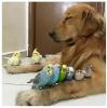GALERIE – Neobvyklá zvířecí přátelství