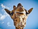 GALERIE – Zvířata, která milují focení