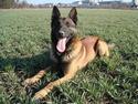 Policejní honička - policejní pes