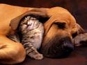 Pejsek a Kočička večeří
