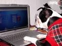 OBRÁZKY - Zvířátka a počítače