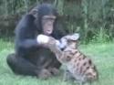 Opička a mládě pumy
