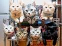 OBRÁZKY - Kočičky