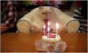 Kočička slaví narozeniny